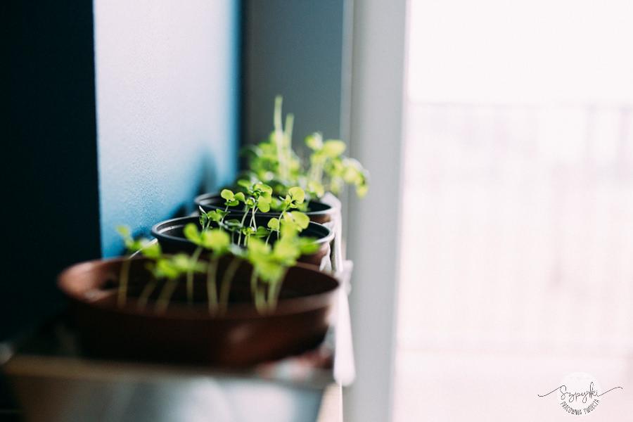 zioła w domu